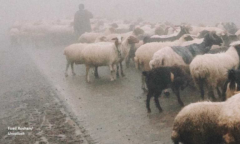 """Epidemia s-a mutat la sat: """"Ce-ai cu noi, mă? Pentru ce să dăm cu var?"""""""